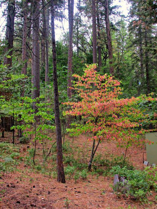 Cabin fall leaves