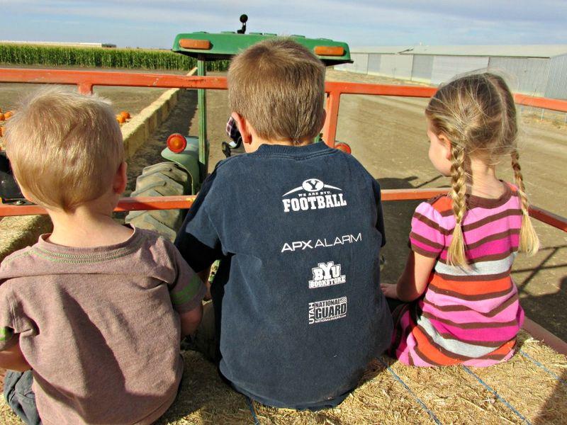 Corn maze tractor ride