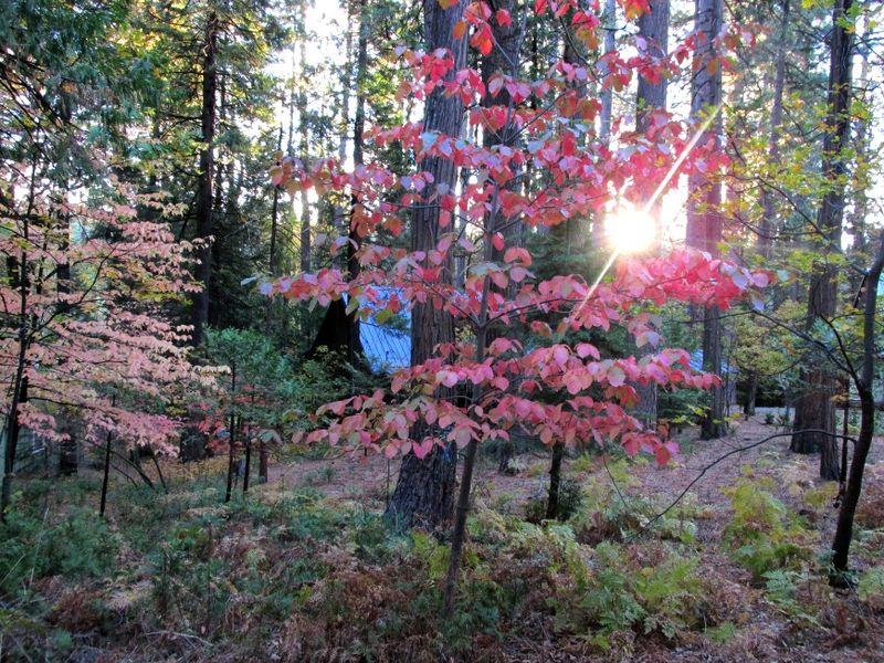 Fall decorations back yard cabin