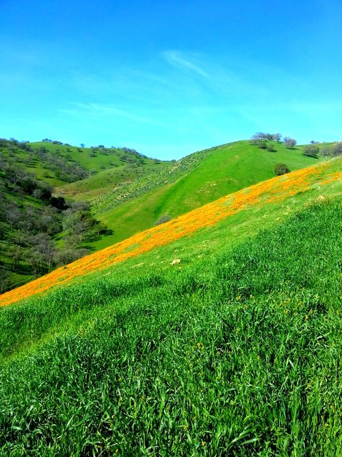 Poppy hill teresa 1