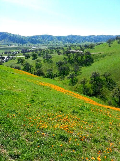 Poppy hill teresa 2