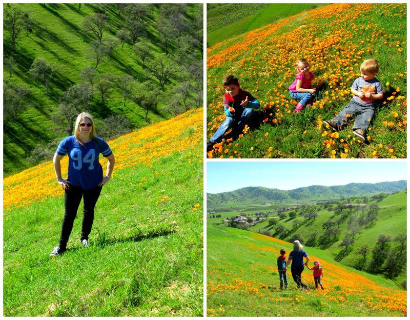 California poppy  Collage