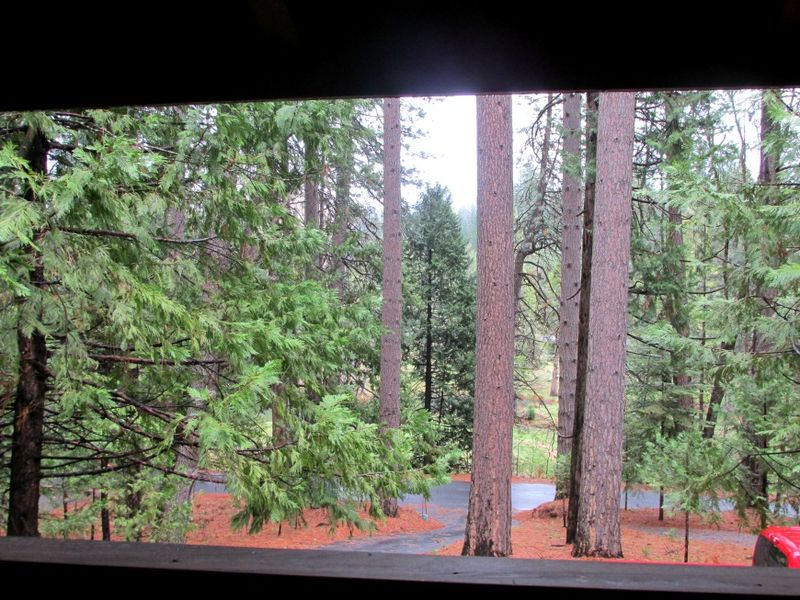 Cabin trees
