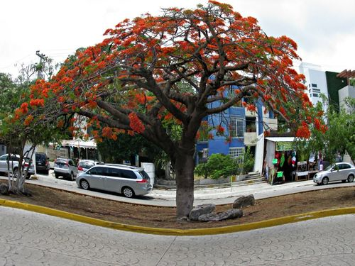 Cancun mexico on the street 3