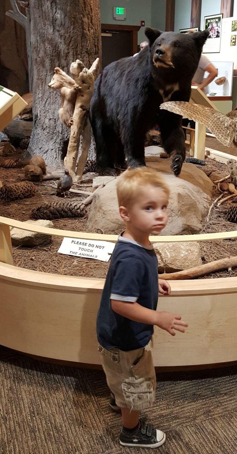 Cabin heidi cole bear 20150804_110823