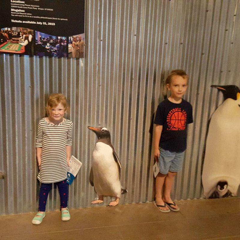 Kent- kids aquarium pen