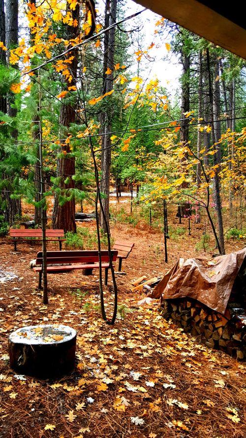 Cabin Nov 2015 leaves
