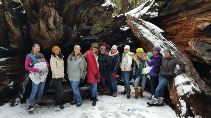 Snowshoeing big trees roots