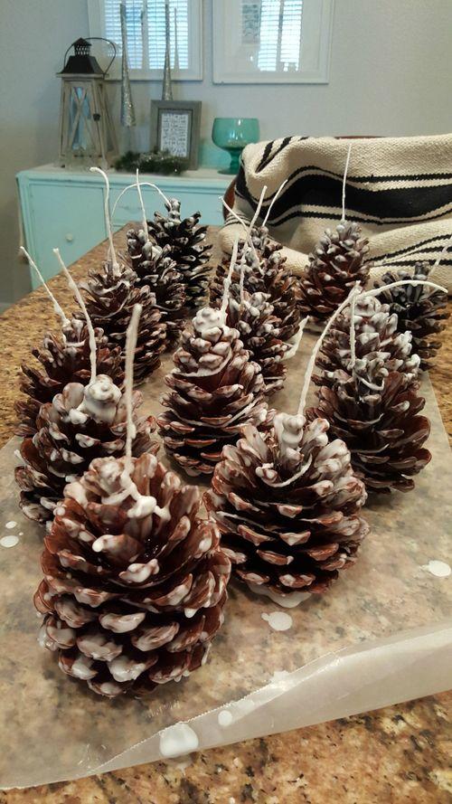 Pine-cone firestarters forest