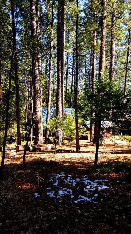 Cabin-back melted snow