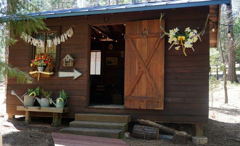 Cabin daffodil day bunkie 1