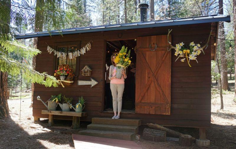 Cabin daffodil day bev