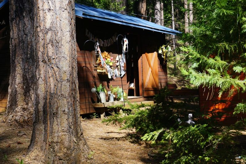 Cabin daffodil day bunkie side