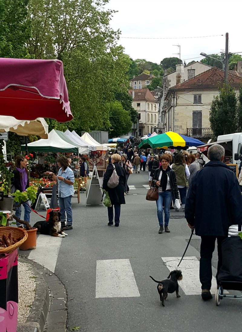 Academy france riberac market dog