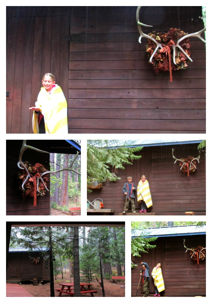 Bunkie in the rainCollage
