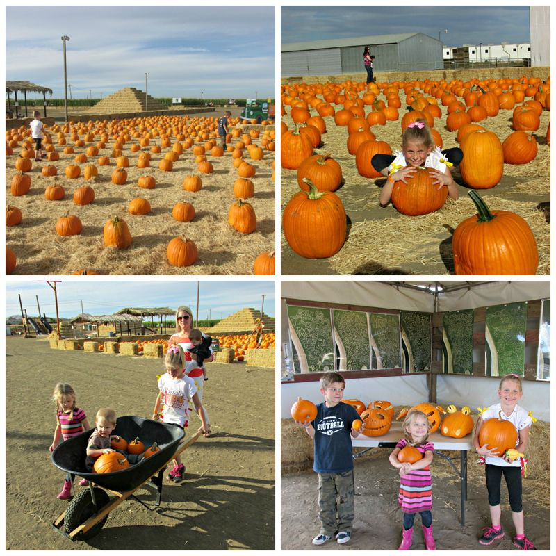 Pumpkin patch 1 Collage