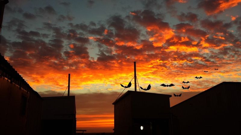 Nuthouse sunrise bats