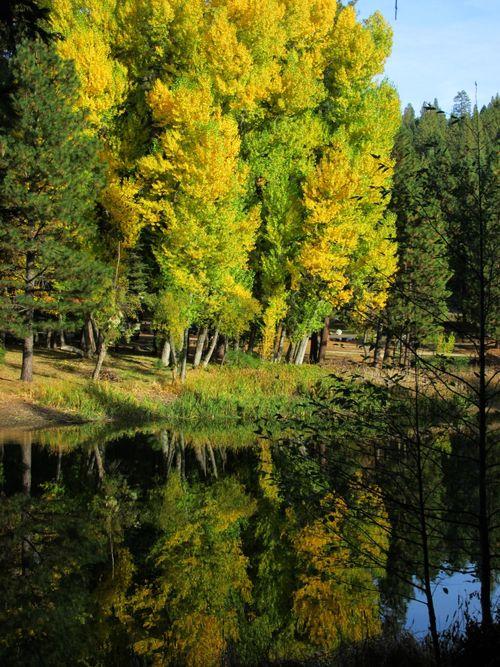Enchanted fall hike trees by lake