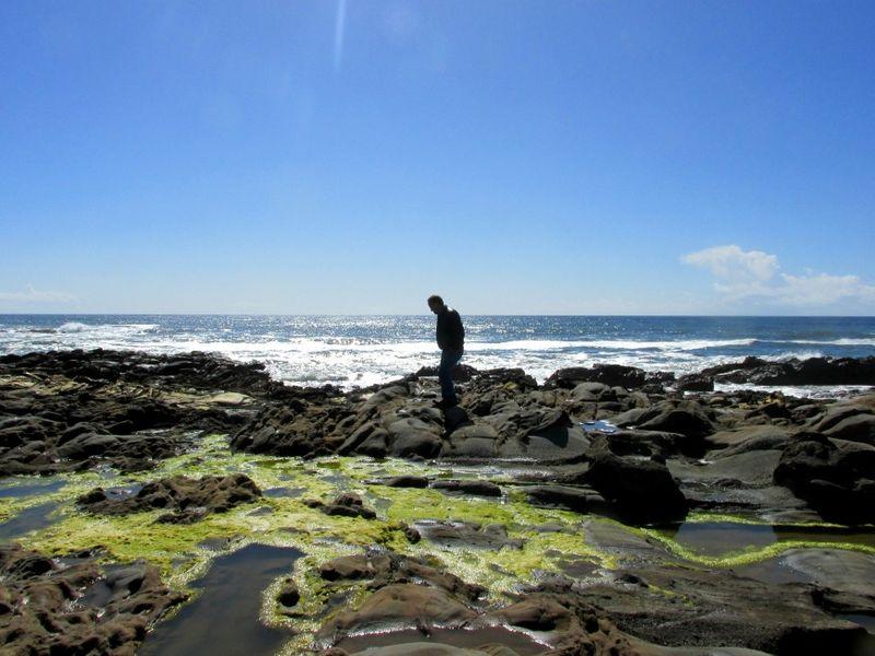 Bean hollow state beach tide pool 2
