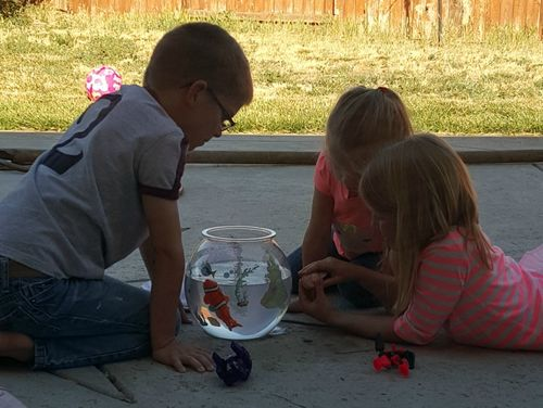 Babysitting fish20150429_165932