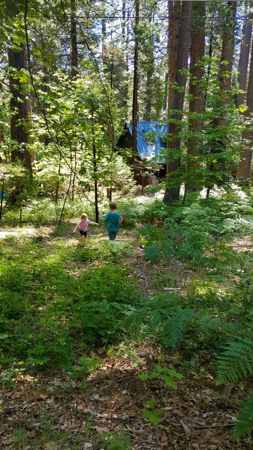 Cabin may 2015 forest kids