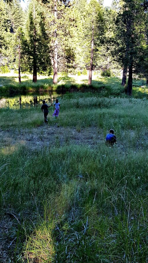 Cabin 2015 in the meadow