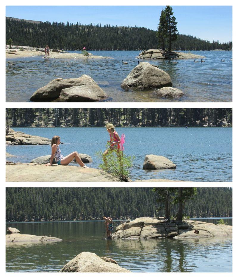 Alpine lake Shannon  ducks Collage