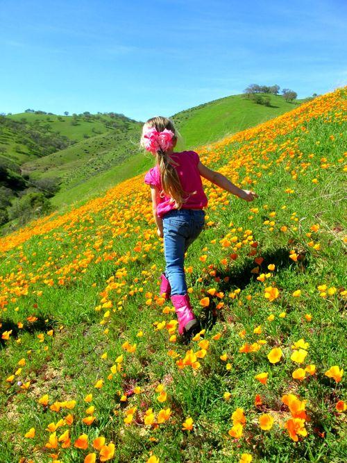Poppy hill audrey
