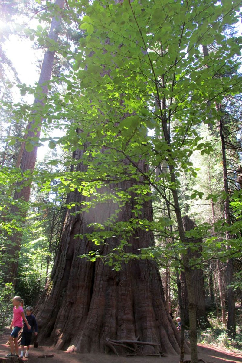 Cabin big trees 4