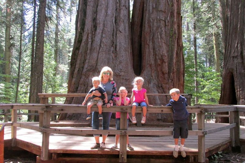 Cabin big trees me and the grands