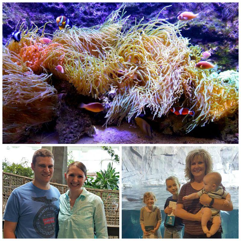 Kent us at the aquarium Collage
