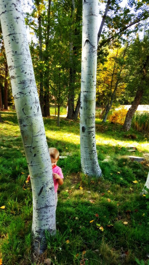 Fall at the cabin- hide and seek