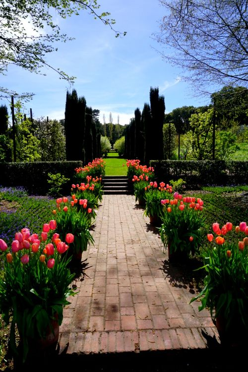 DSC00316 pink tulips path