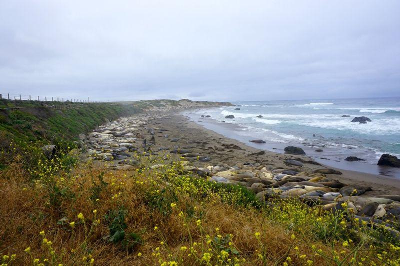 AVW seal beach 8