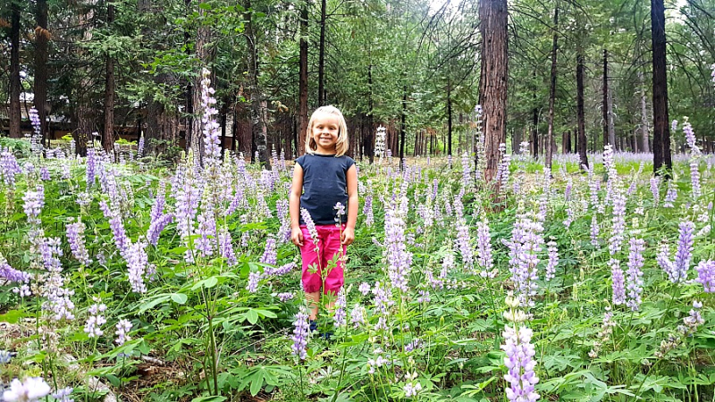 Cabin may 2016 Audrey lupine