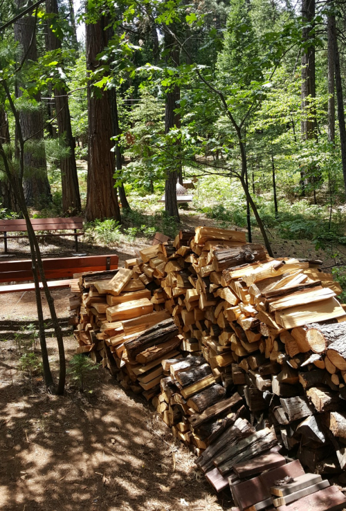 Shannon cabin wood pile