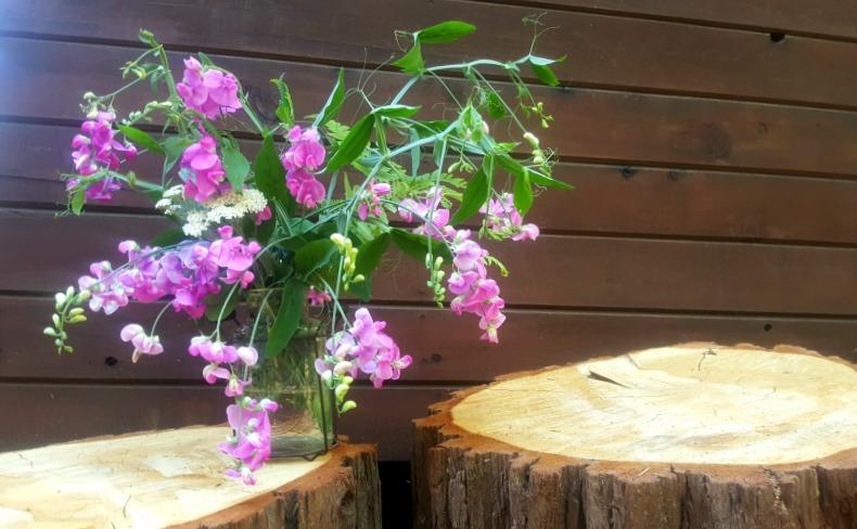 Shannon cabin flowers sweet peas