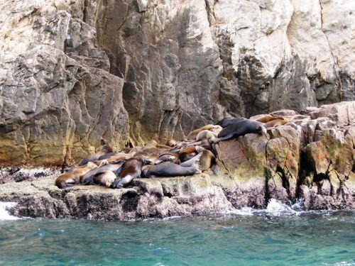 Day 3- seals