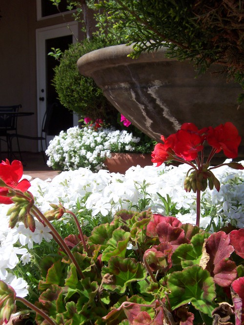 Planters on patio- April