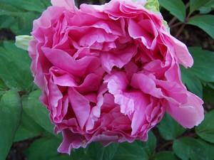 Garden_april32007_001