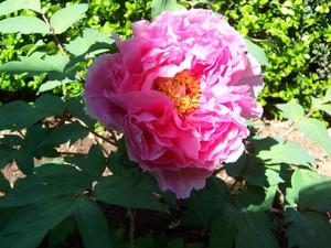 Garden_april32007_008