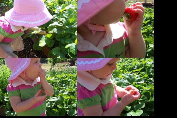 Carleestrawberries_2