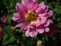 Fallflowers_005