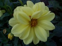 Fallflowers_011