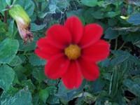 Fallflowers_012