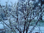 Snowfeb2007_004